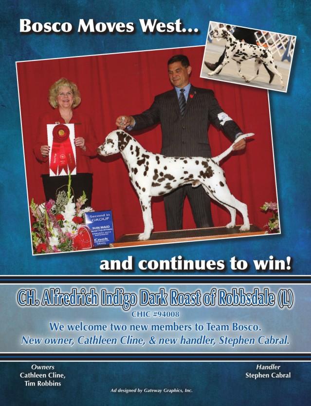 "Dennis /""N/"" Dalmatian Pet Shop M Dog Art Print"